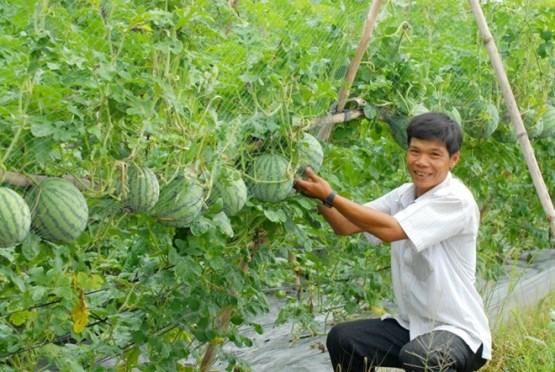 Có thể cho vay tín chấp phục vụ nông nghiệp, nông thông đến 3 tỷ đồng